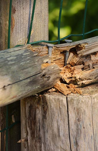 Is it time to replace your fence?