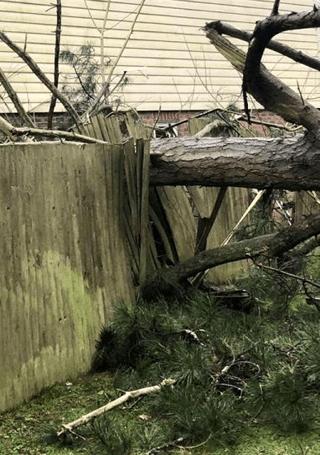 tree fence damage