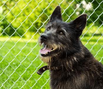 dog safety fence